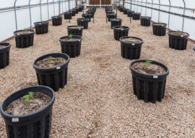 Hoop House Young Plants 1