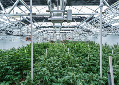 2019_Zoned Properties, Inc._Chino Valley Cultivation Facility Greenhouse Flower Plants