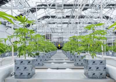 2019_Zoned Properties, Inc._Chino Valley Cultivation Facility Greenhouse Plants